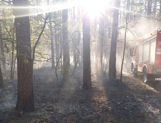 Drugi pożar w ciągu doby w tym samym leśnictwie