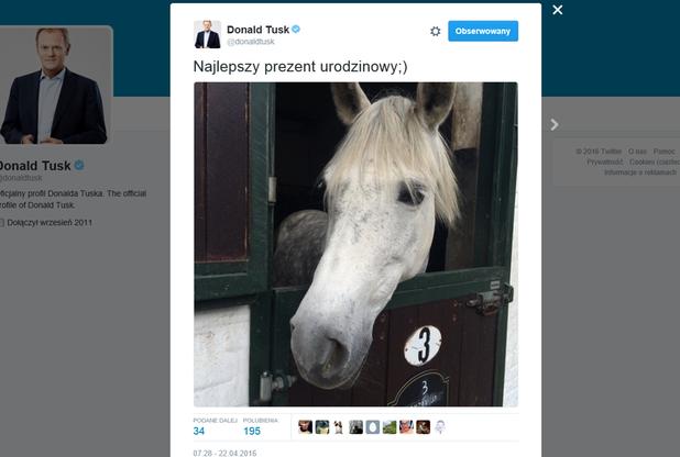 Donald Tusk obchodzi 59. urodziny. Za życzenia podziękował publikując zdjęcie... konia