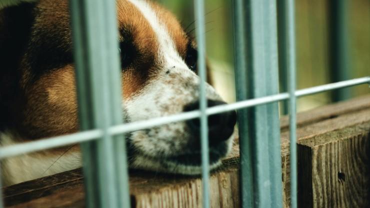 W schronisku zabrakło psów. To skutek epidemii